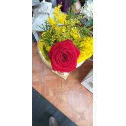 Rosa Singola e mimose
