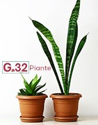 G32 Piante e Fiori - Fioraio Palermo - Piante
